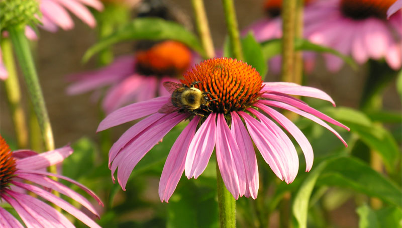 slide_0000_Layer 5