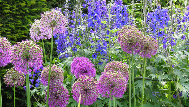 slide_0001_Layer 4