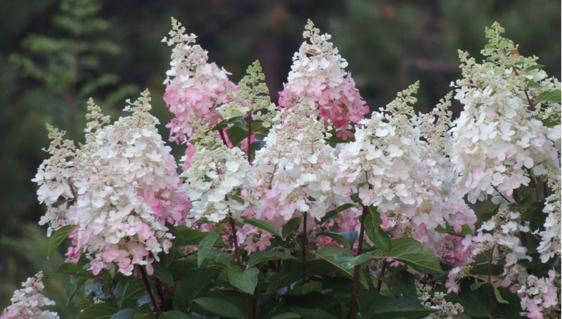 slide_0003_Layer 2