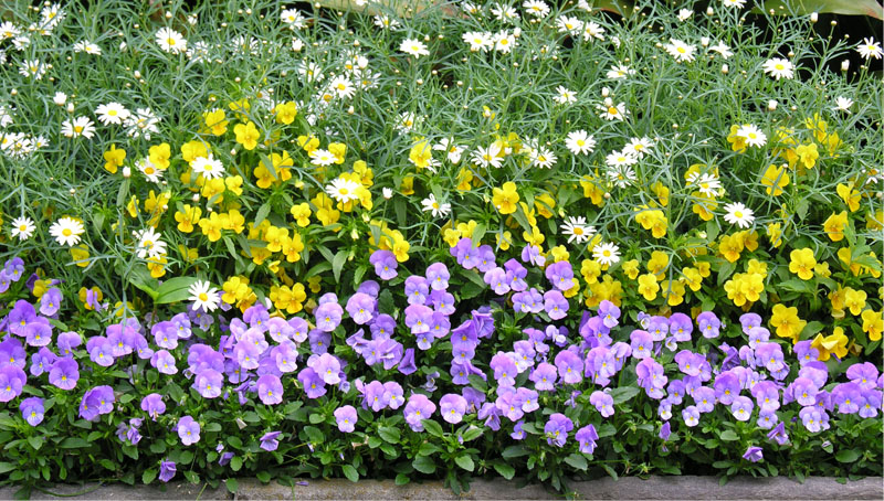 slide_0004_Layer 1