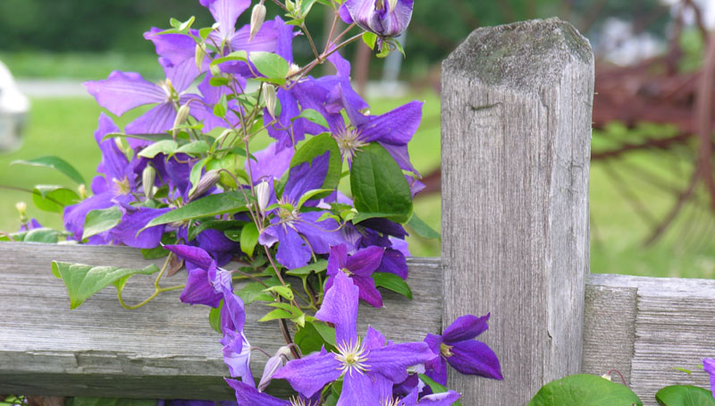 slide_0005_Layer 0